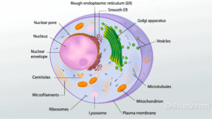 Cross section of a cell and it's components.